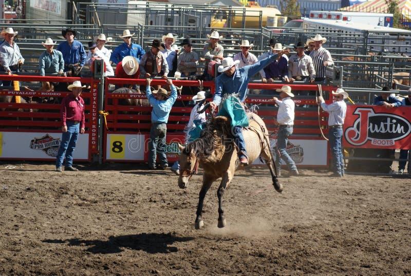 牛仔野马骑马 库存照片