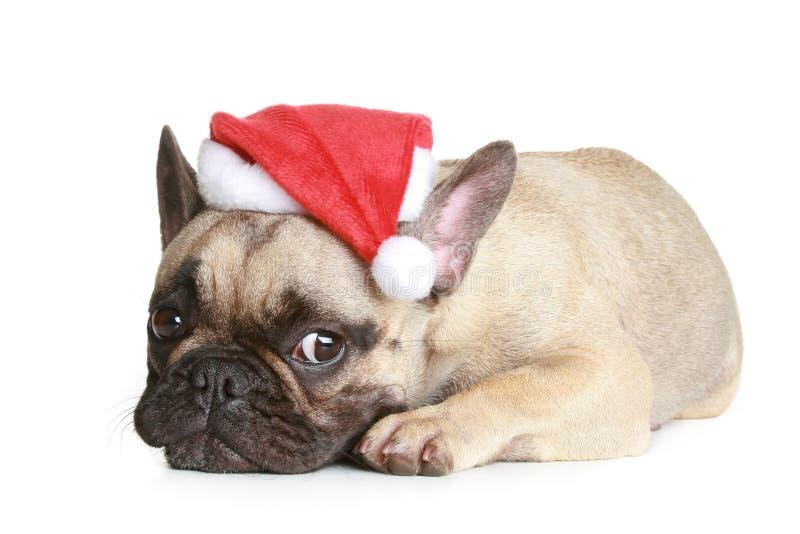牛头犬圣诞节法国帽子谎言 库存照片