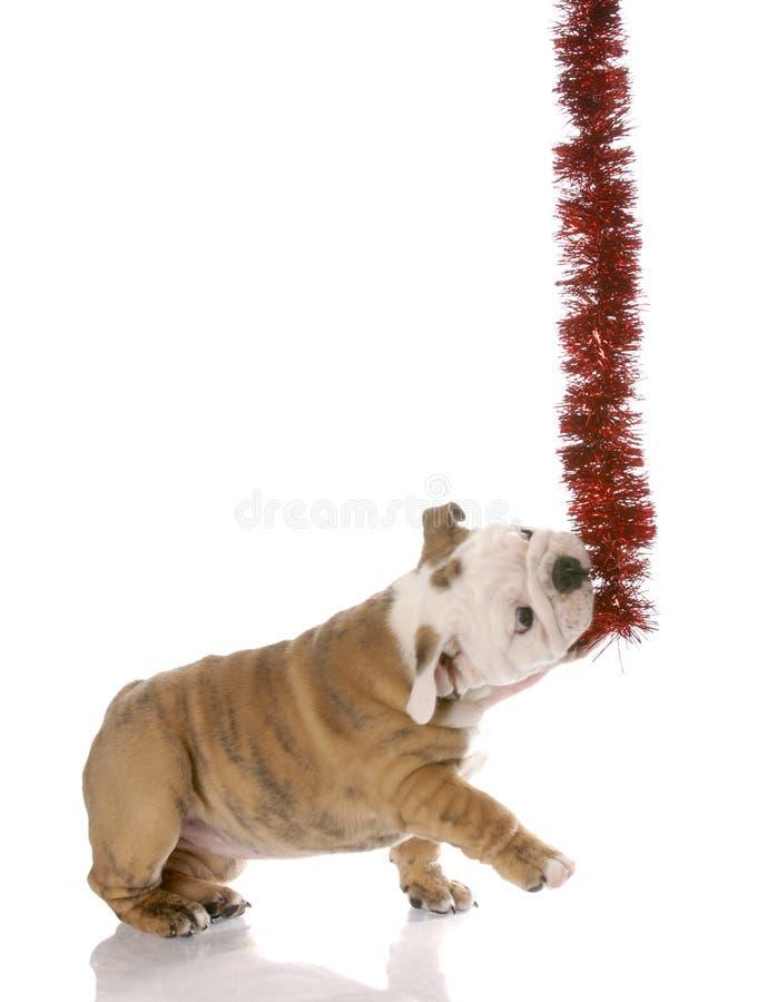 牛头犬圣诞节英国辅助工淘气的一点 免版税库存图片