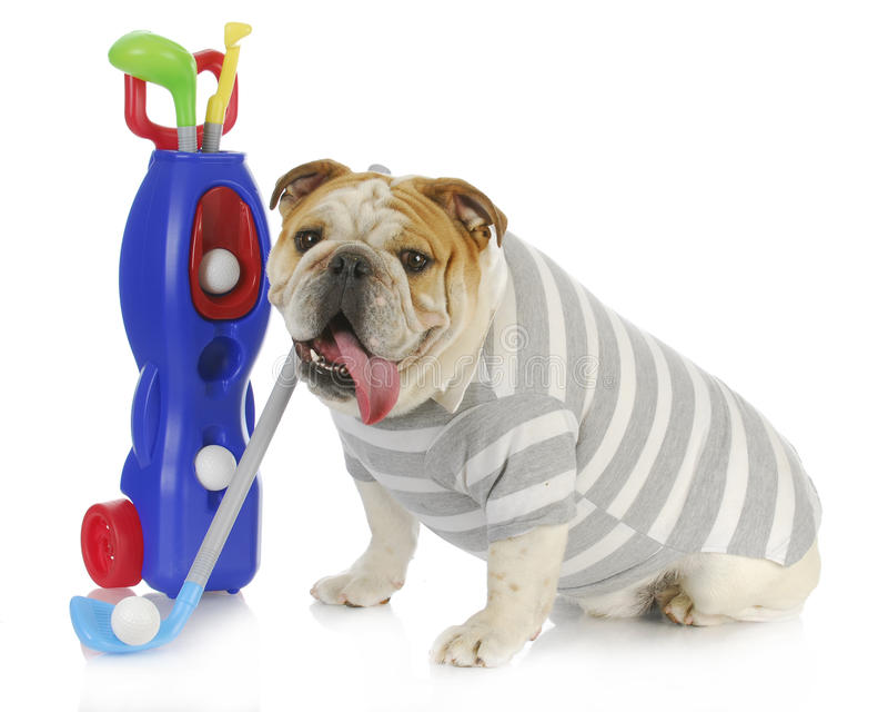 牛头犬高尔夫球运动员 免版税库存照片