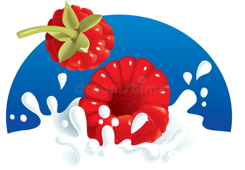 牛奶莓飞溅 向量例证