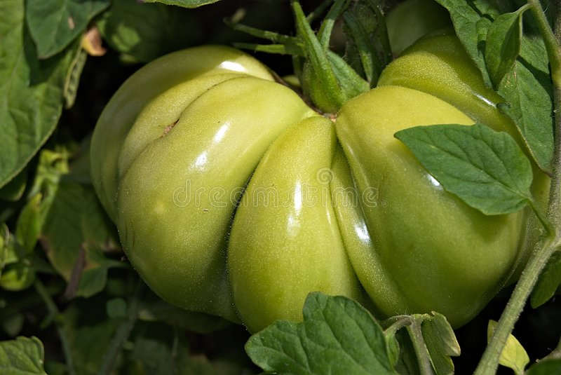 牛排大绿色蕃茄 图库摄影