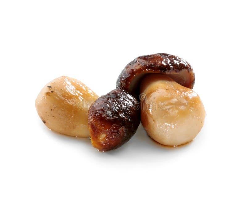 牛肝菌蕈类可食蘑菇或在白色背景隔绝的porcini特写镜头 免版税图库摄影