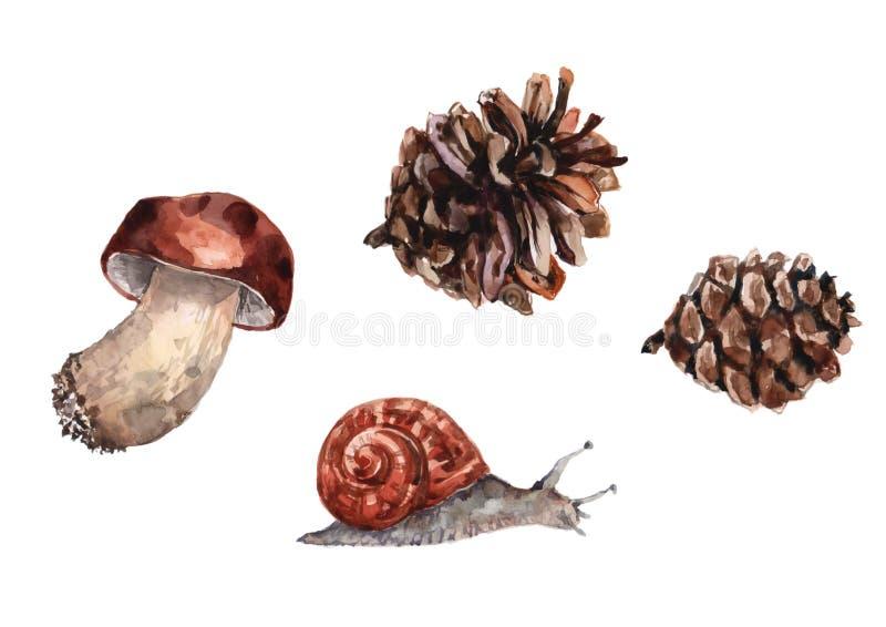 牛肝菌蕈类蘑菇、葡萄蜗牛和两个杉木锥体 在白色背景的水彩 皇族释放例证