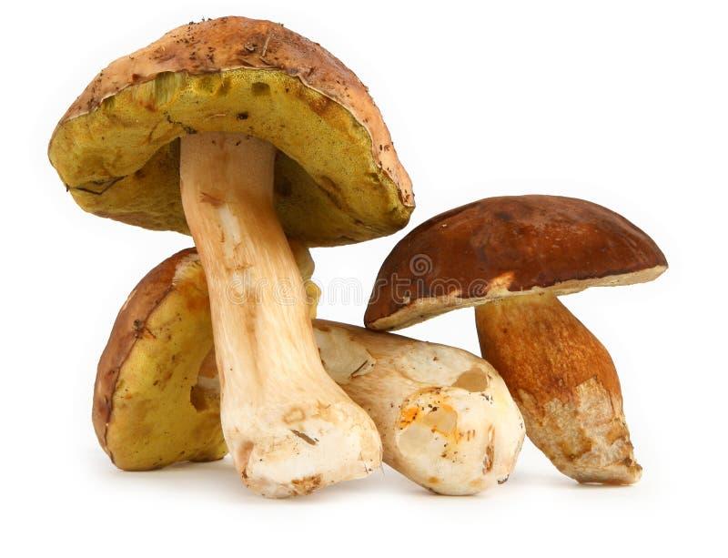 牛肝菌蕈类采蘑菇多种 免版税库存照片
