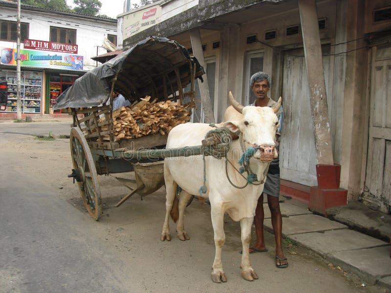 牛车在斯里兰卡 免版税库存照片