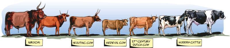 牛通过时间 皇族释放例证
