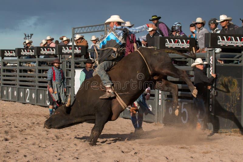 牛仔圈地公牛骑马 免版税库存照片