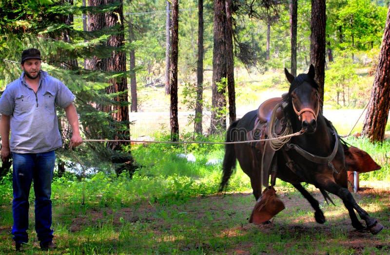 牛仔工作的连续马 免版税图库摄影