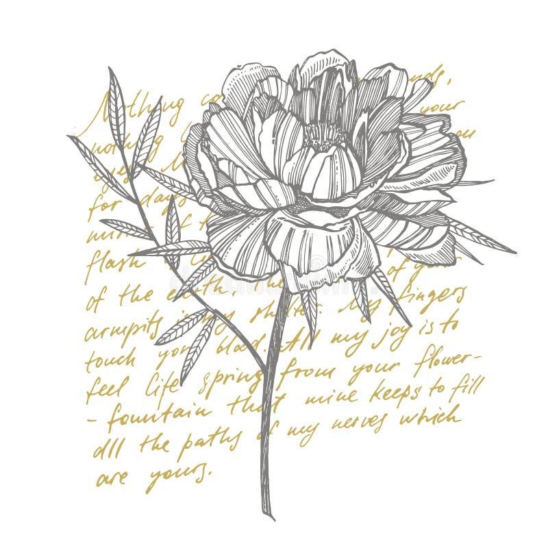 牡丹花和叶子画 手拉的被刻记的花卉集合 植物的例证 伟大为纹身花刺,邀请 库存例证