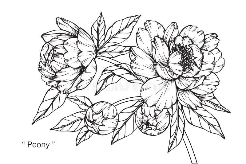 牡丹花图画和剪影 库存例证