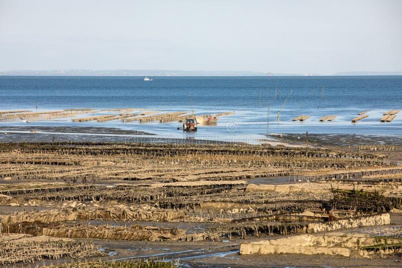 牡蛎养殖场处于低潮中在牡蛎农场,康卡尔,布里坦尼, 库存照片