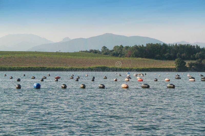 牡蛎农厂浮体在可西嘉岛,法国 库存照片
