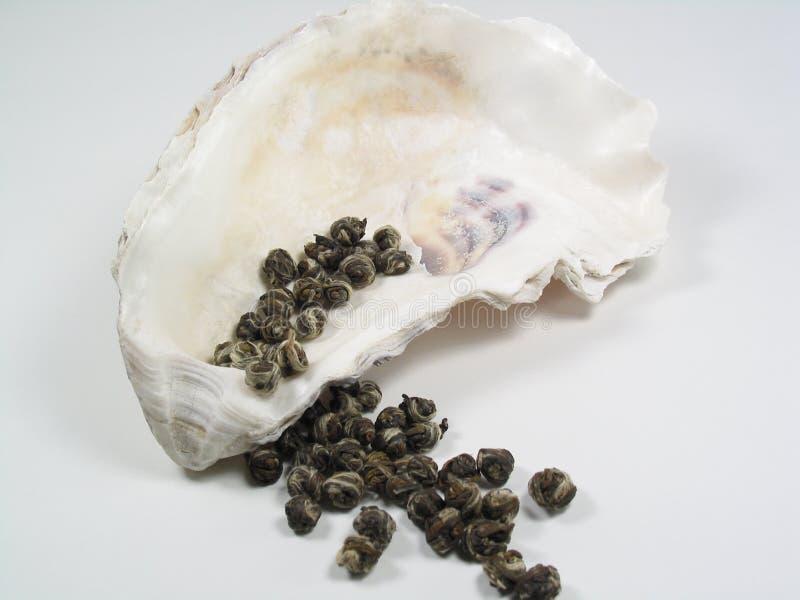 牡蛎成珠状壳茶 免版税库存照片