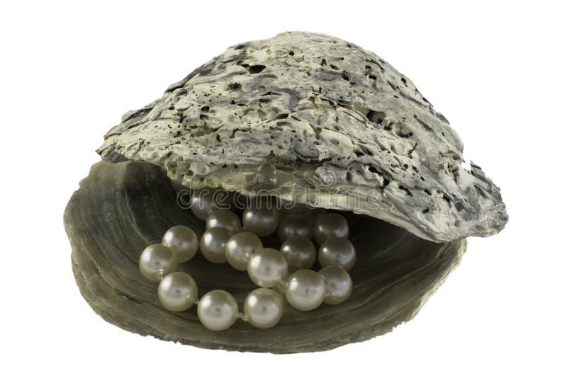 牡蛎成珠状壳 库存图片