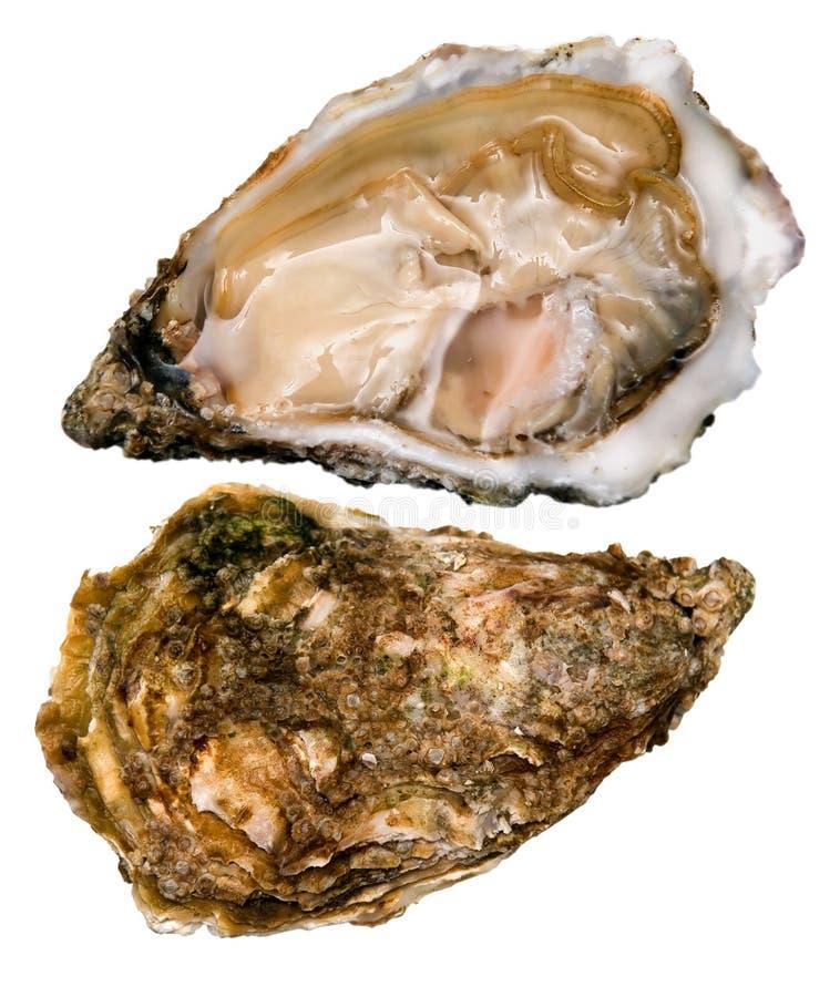 牡蛎成珠状白色 免版税库存照片