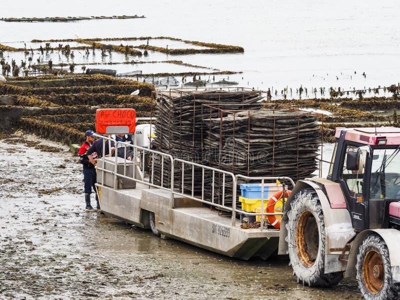 牡蛎有拖拉机和拖车的农夫工作者在法国 图库摄影