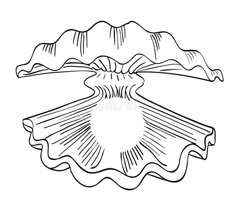牡蛎的动画片图象与珍珠的 库存例证