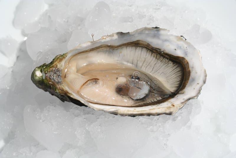 牡蛎 免版税库存照片
