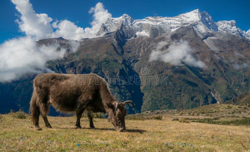 牦牛和峰顶 库存照片