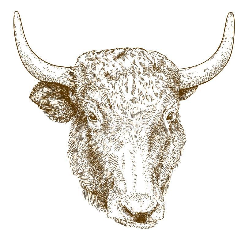 牦牛头的板刻例证 库存例证