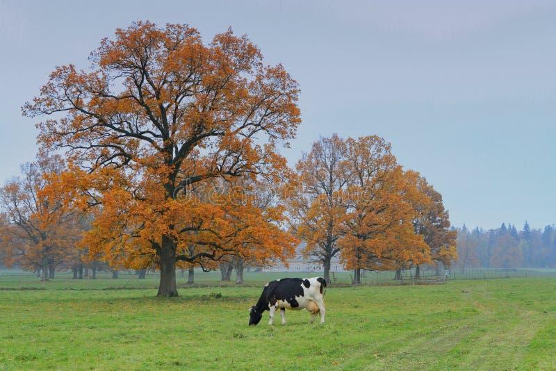 牧场地 免版税库存照片
