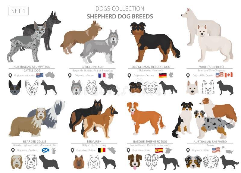 牧羊人和成群在白色隔绝的狗收藏 r 不同颜色和产地 向量例证