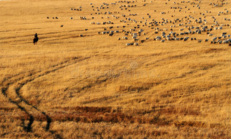 牧羊人和他的绵羊 免版税库存图片