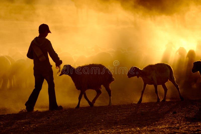 牧羊人年轻人 库存图片