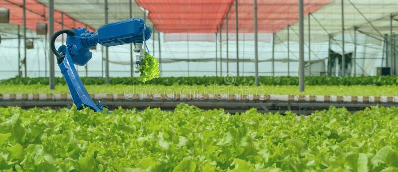 物联网智能工业机器人4 0农业概念、工业农学家、农民使用软件人工智能技术 免版税库存图片