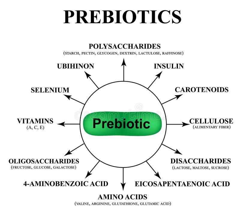 物质prebiotics 乳酸杆菌属和bifidobacteria的食物 Infographics 在被隔绝的背景的传染媒介例证 向量例证