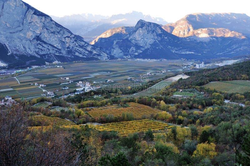 特伦托自治省秋天葡萄园在意大利 免版税图库摄影