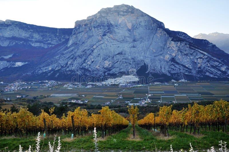 特伦托自治省秋天葡萄园在意大利 免版税库存图片