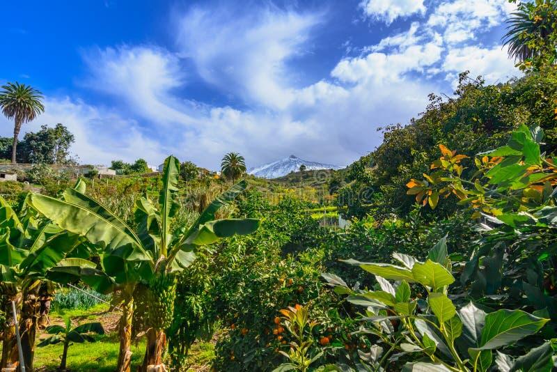 特内里费岛,加那利群岛,西班牙:绿色的美好的风景 免版税图库摄影