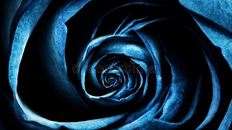 特写镜头动画玫瑰 玫瑰花蕾解开的循环运动的宏观动画 美丽和五颜六色的图表 皇族释放例证