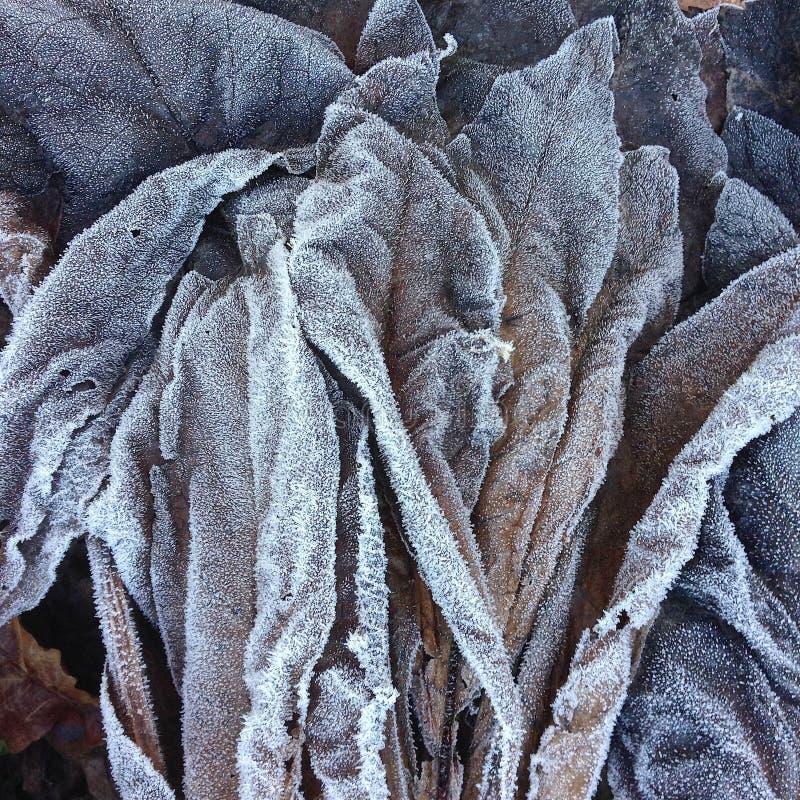 特写镜头和细节在堆结霜的死者在森林下木离开在冬天 库存照片