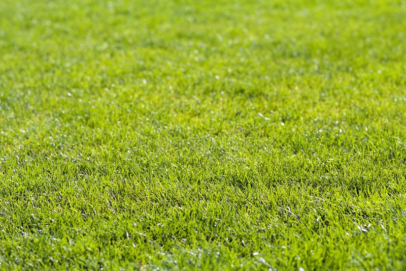 特写镜头在晴朗的夏日详述了新鲜的绿色明亮的草背景  美妙地被割的草坪 好的休息区 库存照片