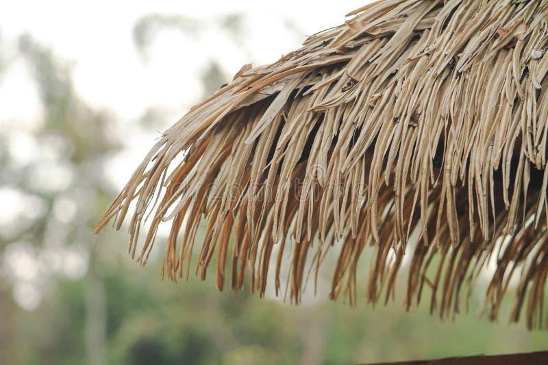 特写镜头在森林公园自然背景影像的屋顶小屋 图库摄影