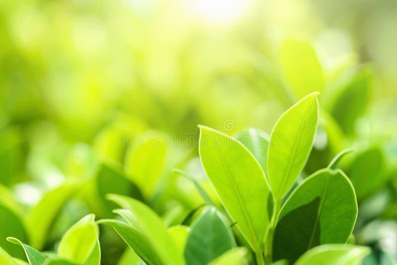 特写镜头在迷离背景的绿色叶子在公园 免版税库存照片