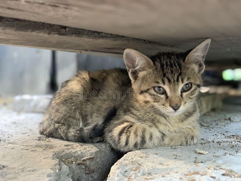特写镜头坐在一个木平台下的射击了小猫 免版税库存图片
