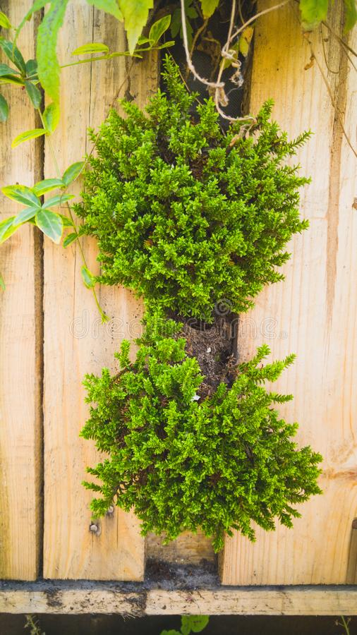 特写镜头定了调子生长在装饰垂直的木墙壁上的小罐的花、草和bushesh的图象在大厦 库存照片