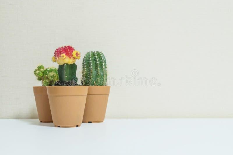 特写镜头小组在棕色塑料罐的美丽的仙人掌为在被弄脏的白色木书桌和奶油颜色墙纸墙壁te装饰 库存图片
