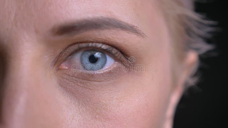 特写镜头年轻可爱的白种人女性半面孔射击有看直接照相机的蓝眼睛的 免版税库存图片