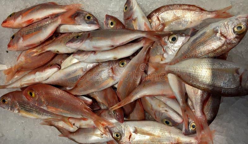 特写镜头新鲜的海鱼金黄树荫,鲜美和健康食品金黄树荫,鲜美和健康foodclose-up新鲜海鱼  免版税库存图片