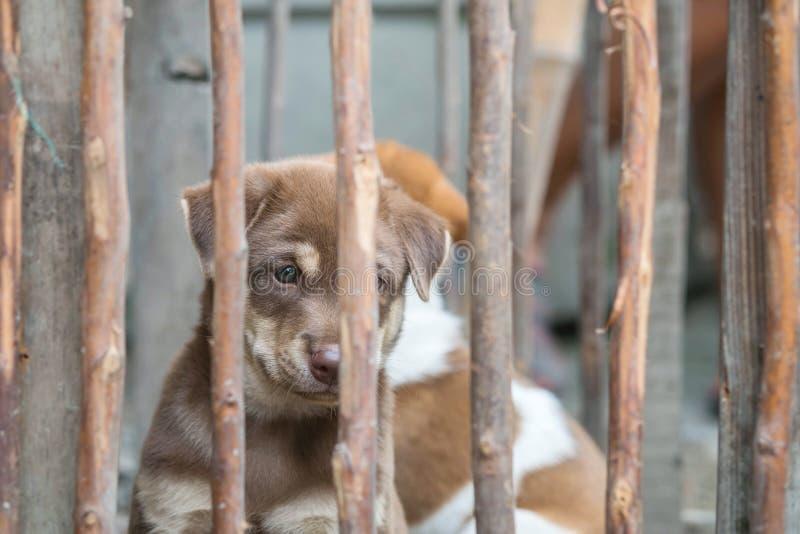 特写镜头棕色小狗在木笼子背景中 库存图片