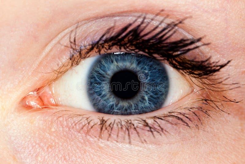 特写镜头眼睛 库存图片