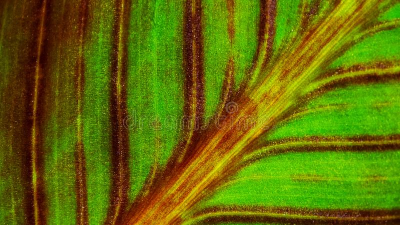 特写镜头红色和绿色叶子对角线 库存照片