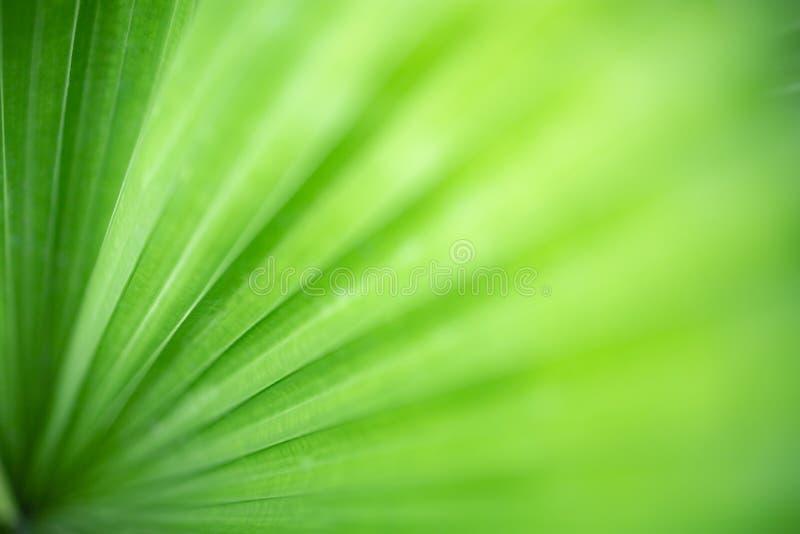 特写镜头绿色叶子和被弄脏的绿叶背景自然视图在有拷贝空间的庭院里文本的使用作为自然的背景 免版税库存照片