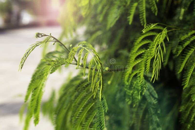 特写镜头绿色叶子自然视图在庭院里 自然绿色植物环境美化使用作为背景或墙纸概念 库存照片