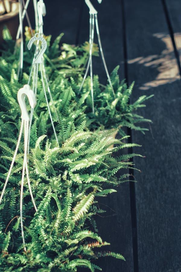 特写镜头绿色叶子自然视图  免版税图库摄影